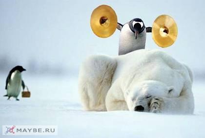 pinguinei